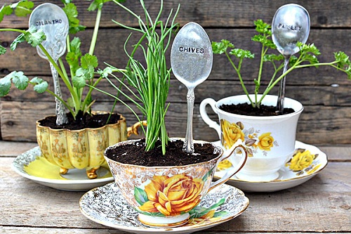 Herbs-Potted-in-Teacups